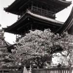 Japan | Kyoto Pagode