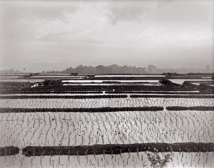 Java | Bandung Reisfelder